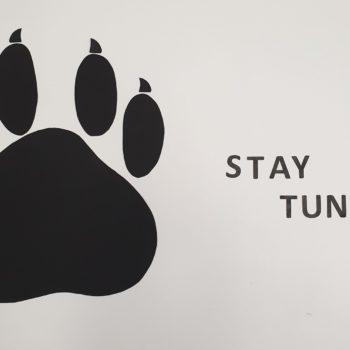 Miesiąc zwierzaków w O4: zbiórka dla Promyka