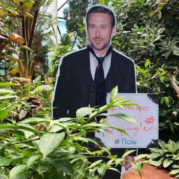 Olivia Garden – coworking w sercu dżungli